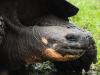 Bigtrip-Galapagos-2012-04