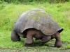 Bigtrip-Galapagos-2012-05