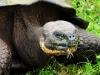 Bigtrip-Galapagos-2012-06