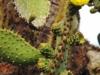 Bigtrip-Galapagos-2012-07