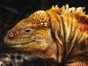 Bigtrip-Galapagos-2012-09