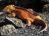 Bigtrip-Galapagos-2012-10