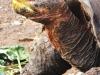 Bigtrip-Galapagos-2012-11