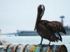 Bigtrip-Galapagos-2012-12