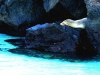 Bigtrip-Galapagos-2012-15