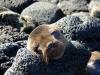 Bigtrip-Galapagos-2012-18