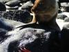 Bigtrip-Galapagos-2012-19