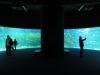 istanbul_2012_aquarium-10