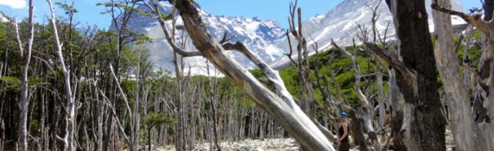 Verlorene Touristenkarte in Patagonien