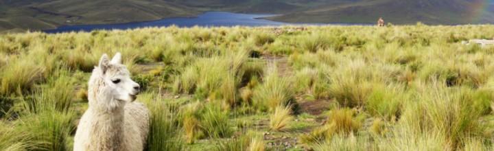 Von Ecuador nach Peru